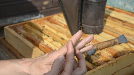 cera : Close-up view of female beekeeper holding a small bee hd stock footage