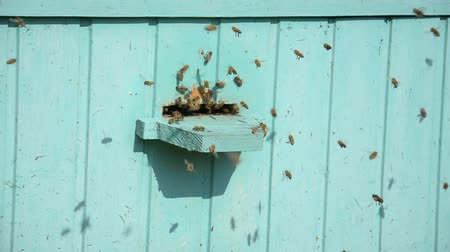 cera : Many bees fly in the hive hd footage Stock Footage