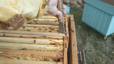 hive : the beekeeper collects propolis from a home hive hd stock footage Stock Footage
