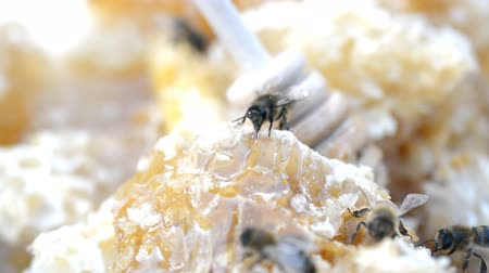 hive : honey cell heap close-up hd stock footage Stock Footage