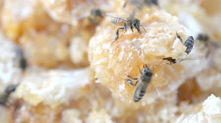 hive : teamwork concept: honey cell and bee close-up hd footage Stock Footage