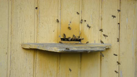 hive : Bees in flight to their hive hd stock footage Stock Footage