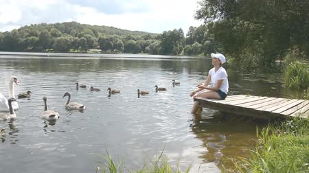zwanenmeer : A young woman feeding on a lake swans and ducks Bird feeding in summer day hd stock footage