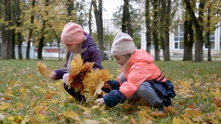 Two little girls collect fallen leaves in autumn park, children friendship concept