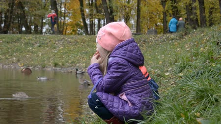 kaczki : Young girls five years old feeding ducks on lake in autumn park Wideo