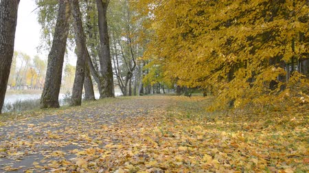 osika : Emty autumn park sidewalk background hd stock footage