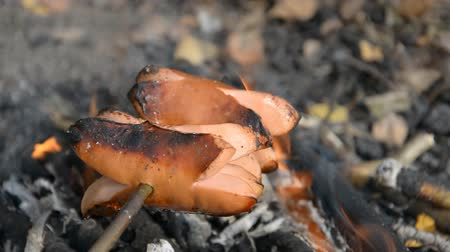 kiełbasa : Roasting sausage over campfire in nature, hiker food Wideo