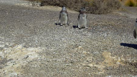 hacienda : Puerto Madryn Pinguins on the Beach and beautiful landscapes of Argentina