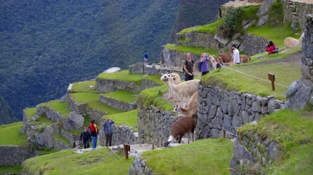перуанский : Machu Pichu and the adventure getting there