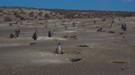 hacienda : Puerto Madryn Pinguins and Landscapes