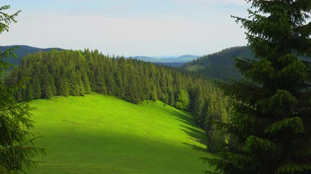 natural landscape : Mountain Apuseni Zona Padis Romania