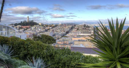 greater : San Francisco. A view towards North Beach and Coit Tower