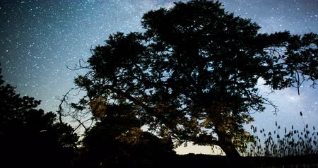 крайняя местности : Milky Way behind an Oak Tree at Lake Mendocino, Mendocino County, California Стоковые видеозаписи