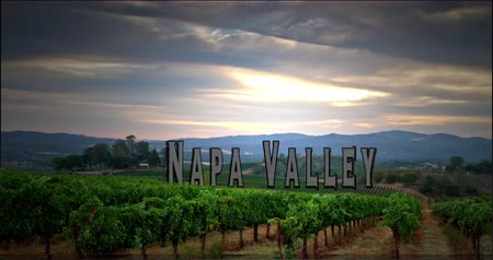 winnica : Sunrise overlooking a Napa Valley Vineyard. Rendered with a 3D Text. Wideo