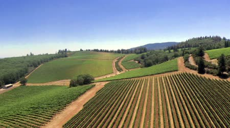 winogrona : Vineyard Composition #1. Five scenic shots from the Wine region in northern California Wideo