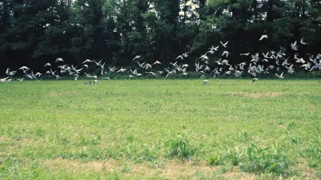 hejno : Flock of birds