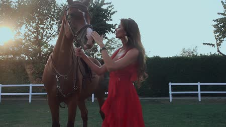 konie : Beautiful girl in stroking a horse in the sun background Wideo