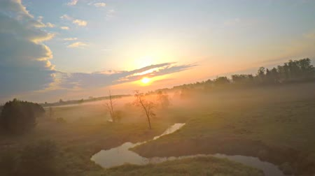 bezmotorové létání : Aerial view of gliding slow motion on a foggy morning. Drone flying between trees, birds eye view.
