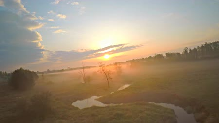 genuíno : Aerial view of gliding slow motion flying foggy morning. Drone flying between trees, birds eye view.
