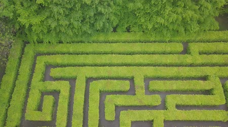 heg : Aerial view of maze, green labyrinth in park, drone point of view from above.