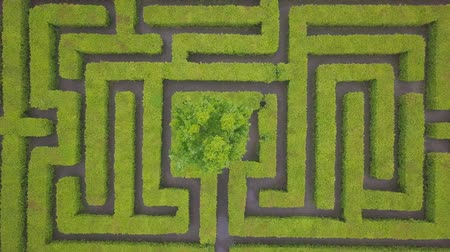 labirent : Aerial view of maze, green labyrinth in park, drone point of view from above.