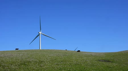 turbine : Windmill in a pasture with cattle grazing. Camera locked. Stock Footage