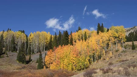 Hillside of aspens in fall colors with wispy white clouds moving in the background. Shot in the Uncompahre National Forest, Colorado. Camera locked.