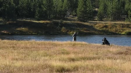 fly fishing : Fly fishing the Madison River in Yellowstone National Park. Camera Handheld. Stock Footage