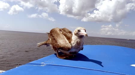 bird hitching a ride on a boat.