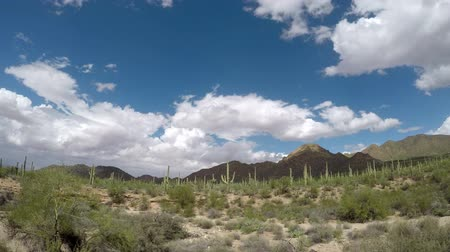Timelapse at Saguaro National Park, Arizona. Camera panning left to right.