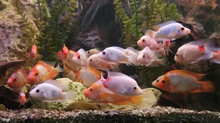 A green beautiful planted tropical freshwater aquarium with fishes Dostupné videozáznamy