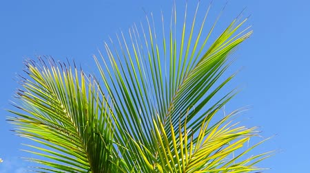 palmas das mãos : Palm tree leaves in the wind and blue sky