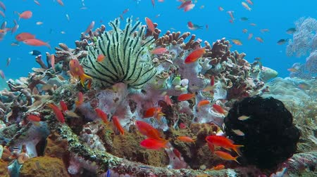 School of tropical fish and sea lily on the colorful underwater coral reef. Стоковые видеозаписи