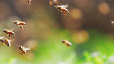 crowd together : Slow motion Close up of big swarm of honey bees flying around crawl in and out beehive through bamboo hole in apiary spring sunny day Stock Footage