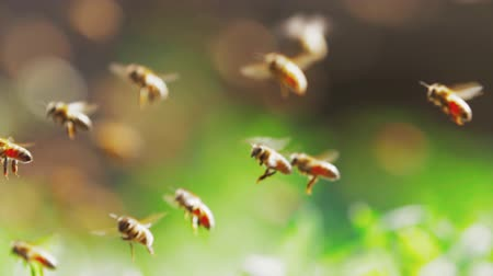 Slow motion of flock of honeybee flying in the sunshine with blurred background