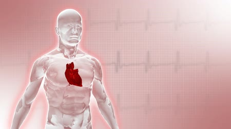 puls : Background with 3d glassy man with heart. Seamless loop.