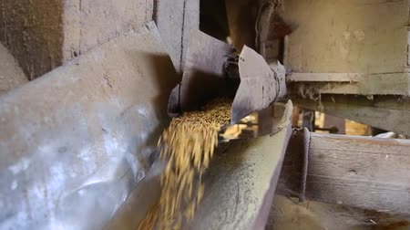 Rice produced from rice mill before milling , Srisaket, Thailand Stock Footage
