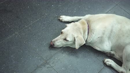doação : A white dog feel lonely in the street of big city. Vídeos