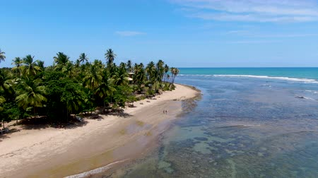 Aerial view of tropical white sand beach, palm trees and turquoise clear sea water in Praia do Forte, Bahia, Brazil. Travel tropical destination in Brazil Стоковые видеозаписи