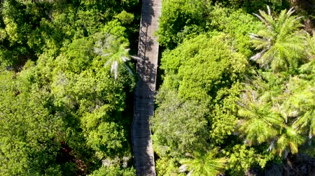 rural brazil : Aerial view of wooded bridge over the tropical forest. Wooden bridge walkway in rain forest supporting lush ferns and palms trees during hot sunny summer. Praia do Forte, Brazil