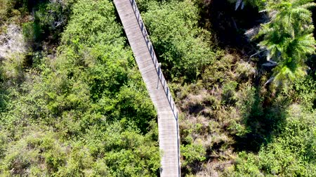 Aerial view of wooded bridge over the tropical forest. Wooden bridge walkway in rain forest supporting lush ferns and palms trees during hot sunny summer. Praia do Forte, Brazil