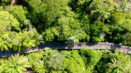 puente peatonal : Aerial view of wooded bridge over the tropical forest. Wooden bridge walkway in rain forest supporting lush ferns and palms trees during hot sunny summer. Praia do Forte, Brazil