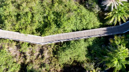 способ : Aerial view of wooded bridge over the tropical forest. Wooden bridge walkway in rain forest supporting lush ferns and palms trees during hot sunny summer. Praia do Forte, Brazil