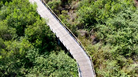 brasil : Aerial view of wooded bridge over the tropical forest. Wooden bridge walkway in rain forest supporting lush ferns and palms trees during hot sunny summer. Praia do Forte, Brazil