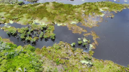 rural brazil : Aerial view of tropical rain forest, jungle in Brazil. Wetland forest with river, lush ferns and palms trees. Praia do Forte, Brazil