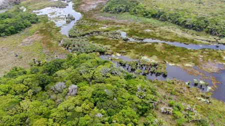 brezilya : Aerial view of tropical rain forest, jungle in Brazil. Wetland forest with river, lush ferns and palms trees. Praia do Forte, Brazil