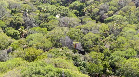 rural brazil : Aerial view of tropical forest, jungle in Praia Do Forte, Brazil. Detailed of a forest supporting lush ferns and palms trees. mountain ranges and hills covered by evergreen forest. Stock Footage