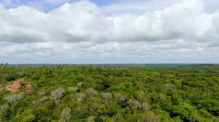 Aerial view of tropical forest, jungle in Praia Do Forte, Brazil. Detailed of a forest supporting lush ferns and palms trees. mountain ranges and hills covered by evergreen forest. Стоковые видеозаписи