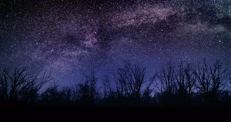 Amazing Bushes Night Sky Milky Way Moon and Stars Time Lapse 4k