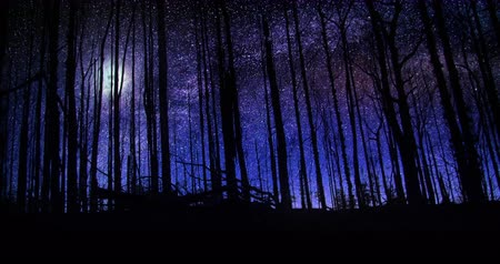 Beautiful Forest Night Sky Milky Way Moon and Stars Time Lapse 4k Wideo